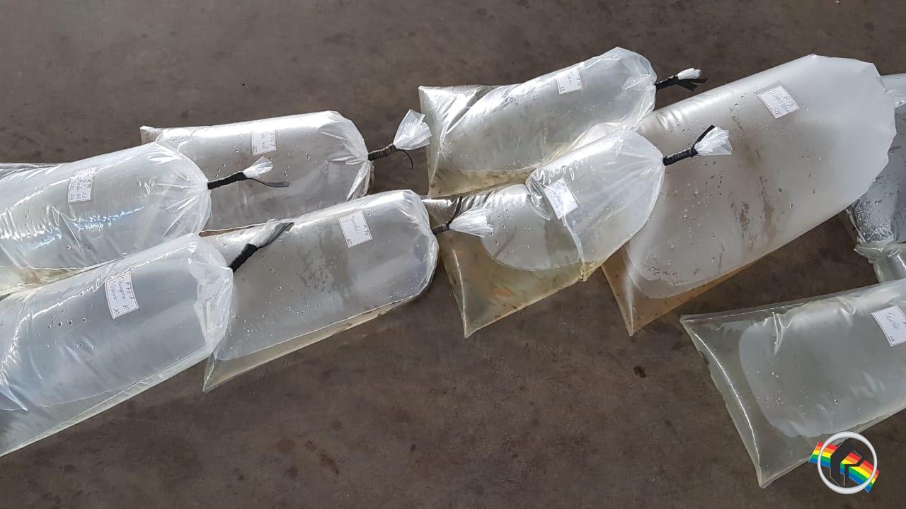 Aquita realiza entrega de 55 mil alevinos