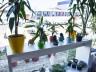 Flor de Liz Floricultura inaugura em novo endereço no município