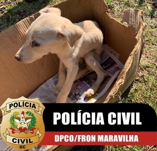 Polícia Civil resgata cachorro vítima de maus-tratos