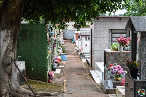 Descuido das famílias fazem focos da dengue disparar no cemitério São Miguel e Almas