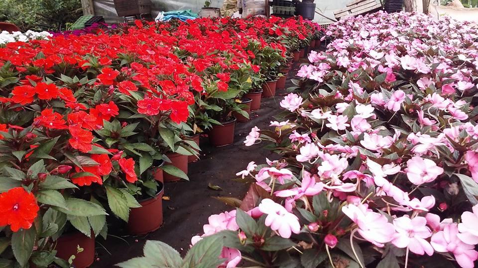 Casa Familiar Rural de Iporã do Oeste se destaca na produção de mudas de flores