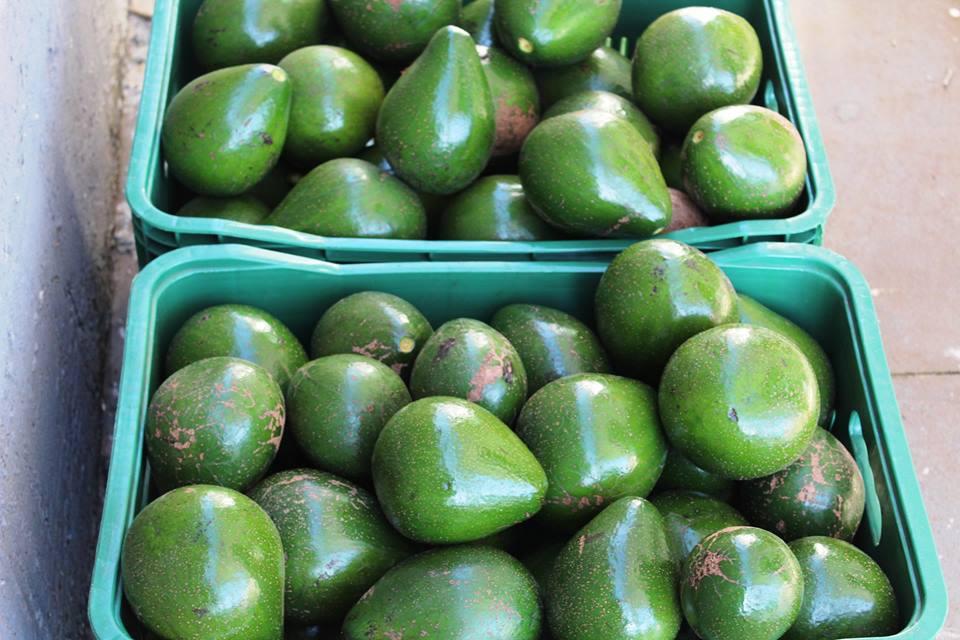 Agricultores entregam mais de 2 mil kg de mercadorias do Programa de Aquisição de Alimentos