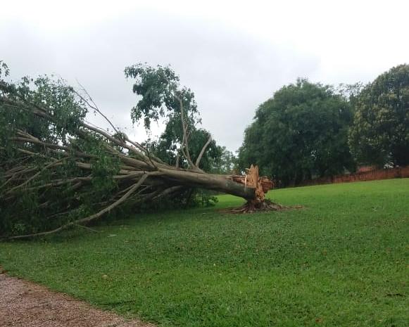 Temporal derruba 30 árvores, provoca destelhamentos e deixa prejuízo de R$ 350 mil