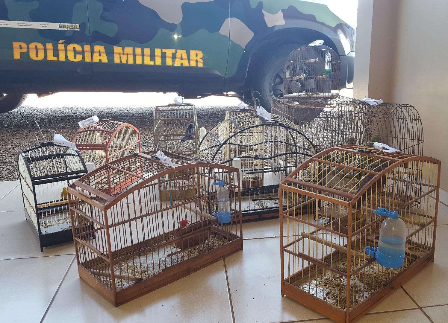 Aves mantidas em cativeiro são apreendidas pela Polícia Ambiental