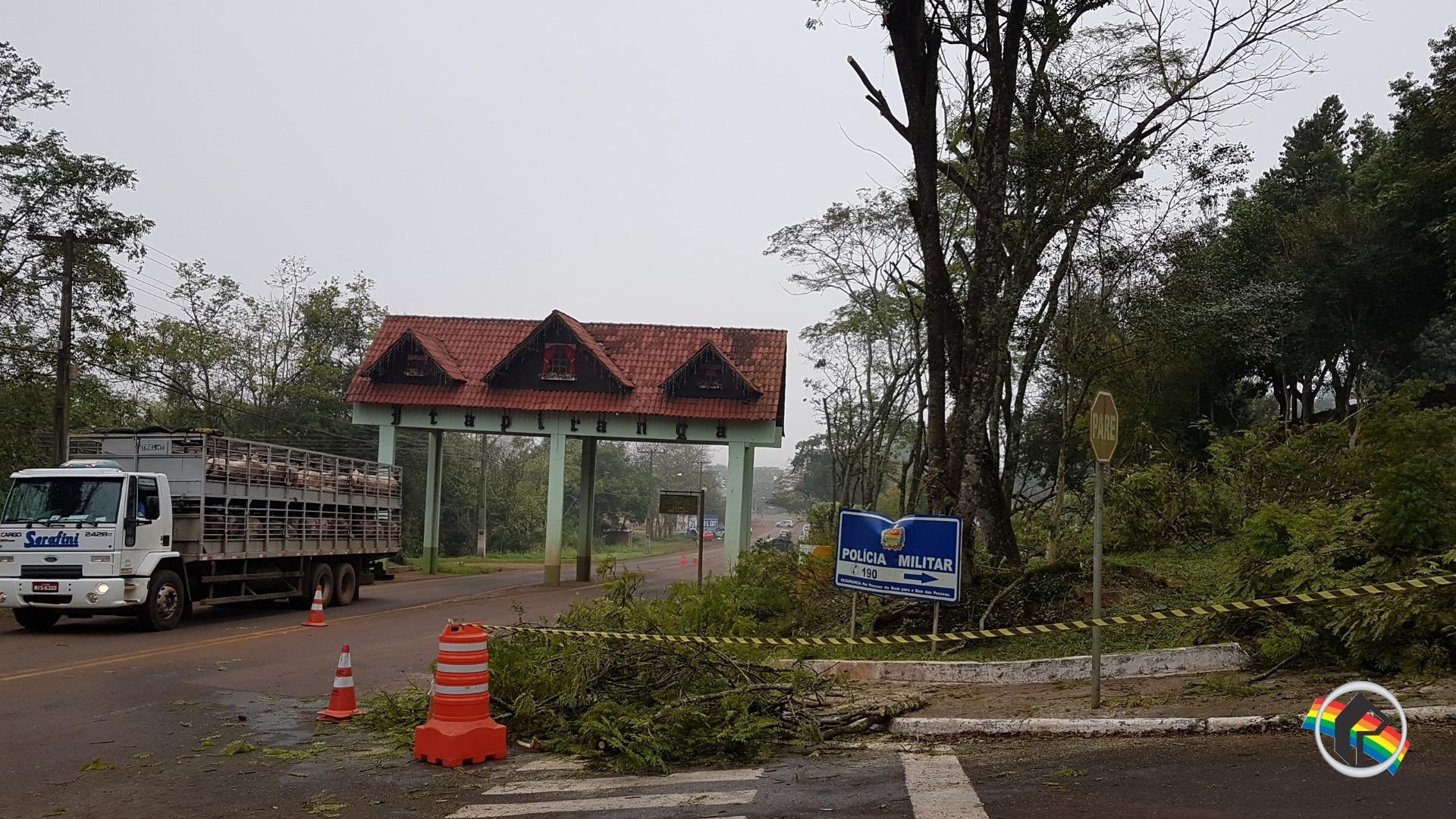Setor de urbanismo realiza poda de árvores