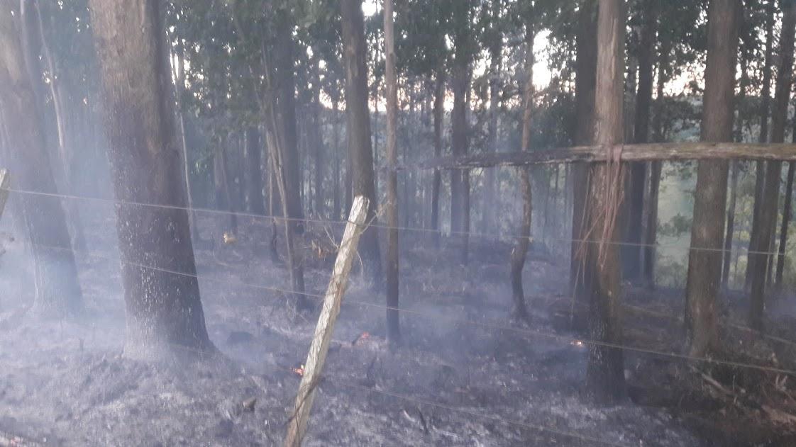 Incêndio florestal mobiliza bombeiros por duas horas