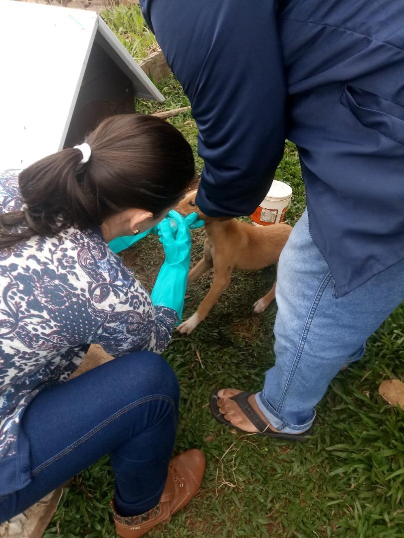 Agricultura controla infestação de carrapatos na Vila Nova II