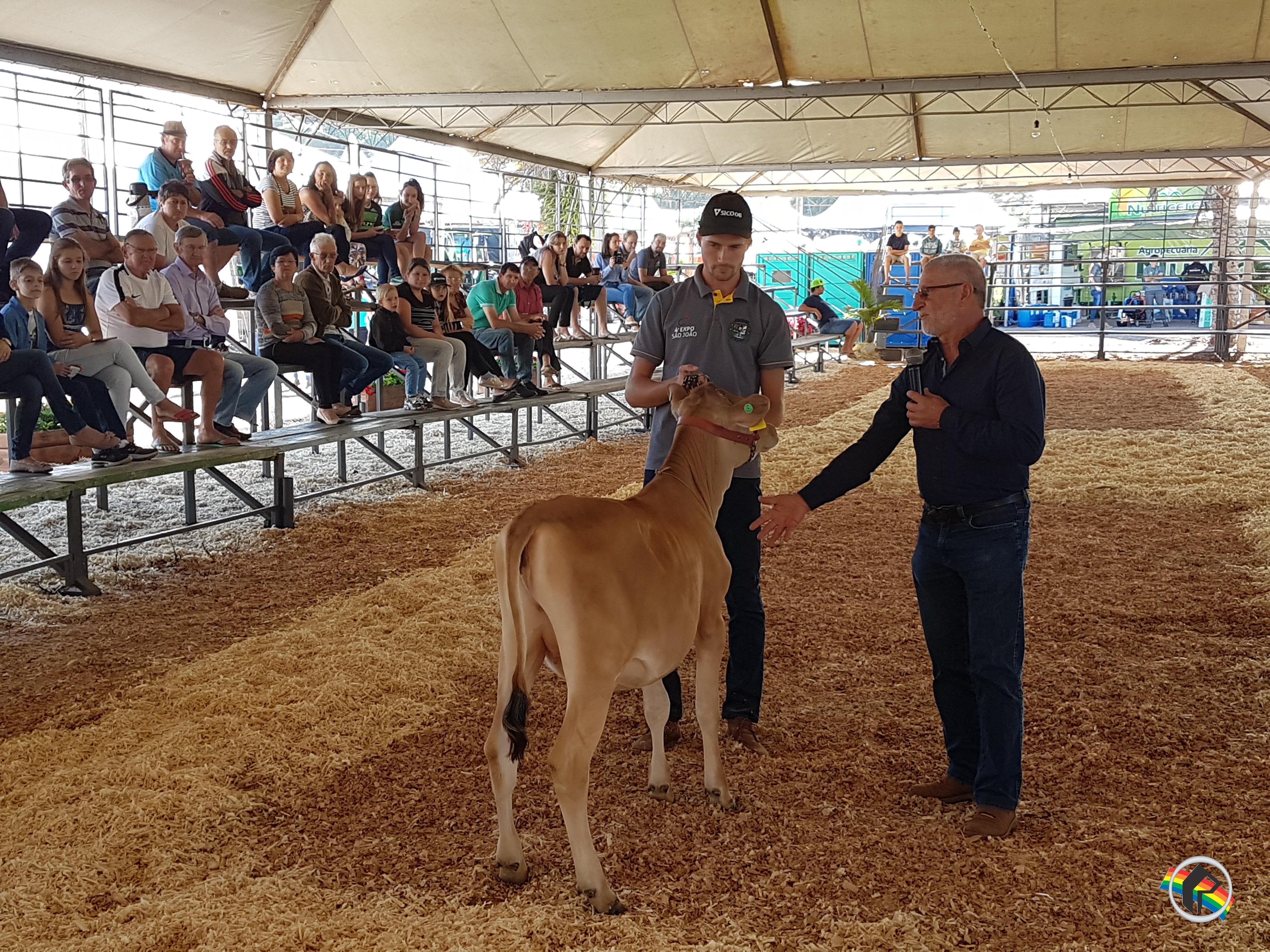 Expo São João registra alta genética em gado leiteiro