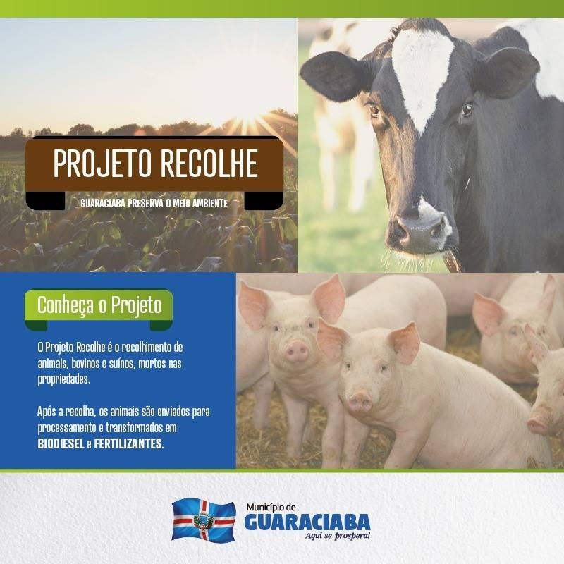 Mais de 80 animais mortos já foram recolhidos em Guaraciaba
