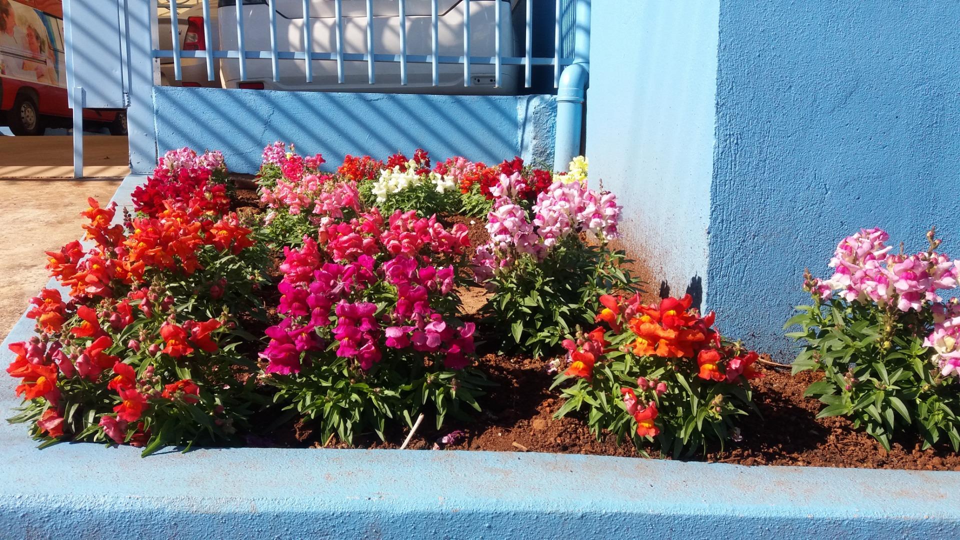 Flores de inverno chamam atenção em Santa Helena