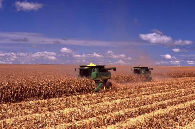 Produtores catarinenses estão descontentes com a importação de milho