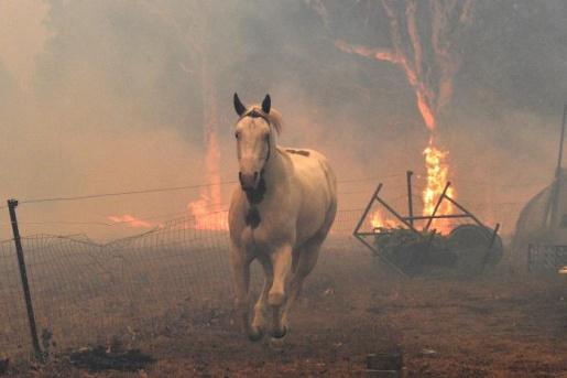Incêndios na Austrália já mataram quase meio bilhão de animais