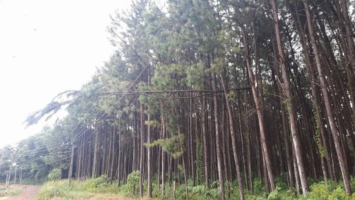 Mondai terá projeto para regulamentar plantio de árvores próximo a rede elétrica