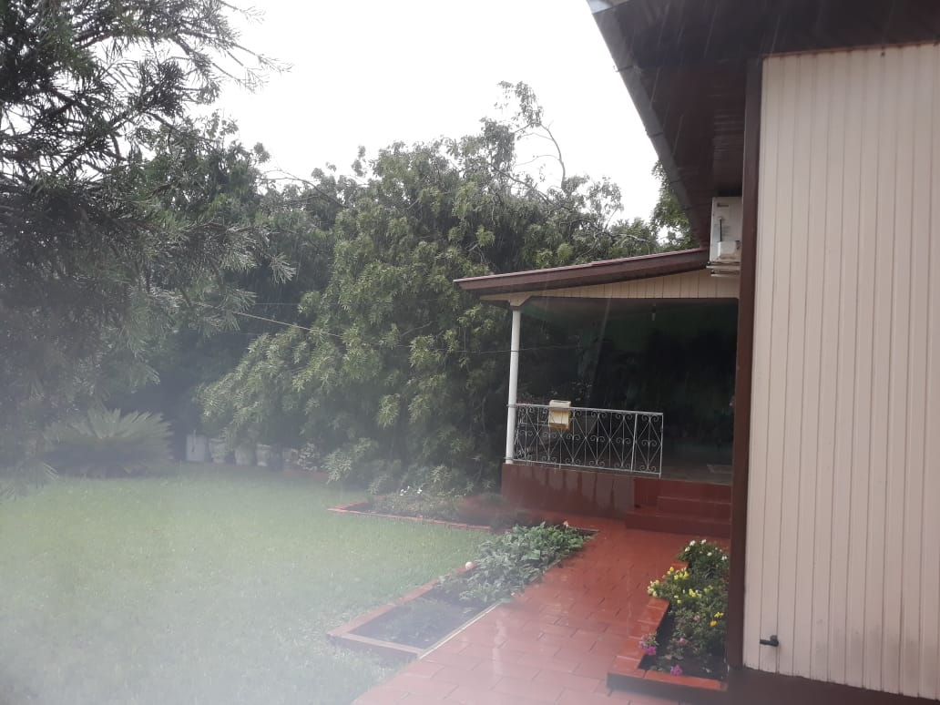 Ventos causam destelhamentos e queda de árvores em São José do Cedro