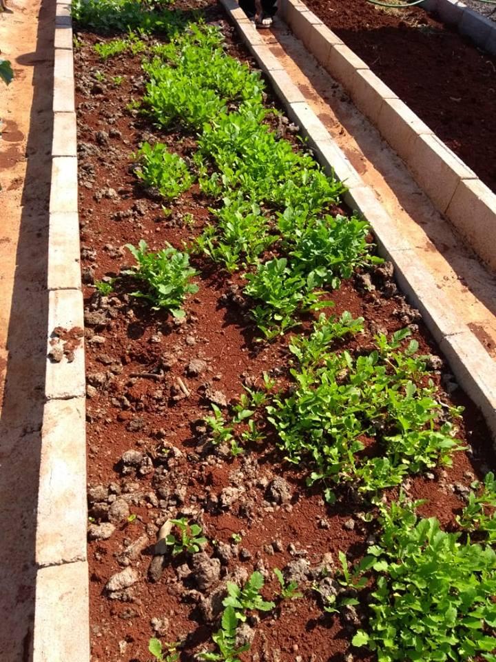 APAE Caminho de Luz implanta horta como atividade terapêutica e ocupacional para os alunos