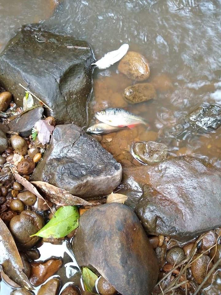 Derramamento de dejetos causa morte de peixes