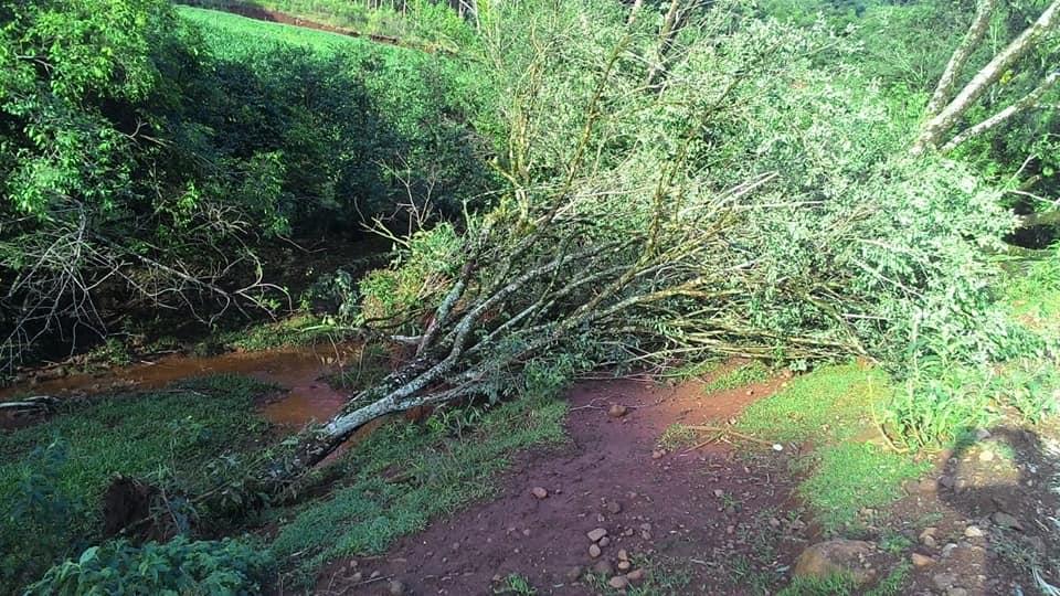 Ventos fortes e chuva torrencial causam estragos no interior de Princesa