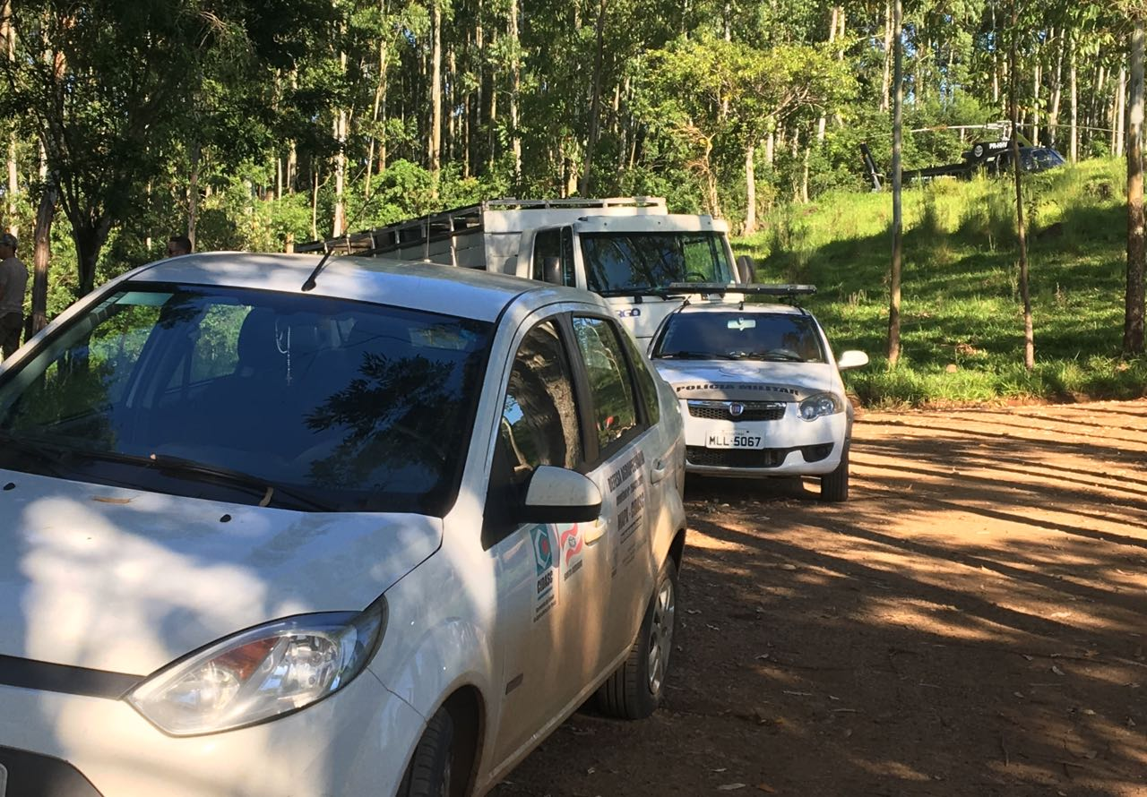 Operação da Cidasc, Polícias Civil e Militar apreende bovinos irregulares em Iporã do Oeste