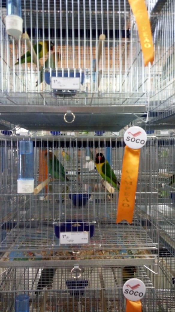 Associação dos criadores de pássaros de Iporã do Oeste completa dez anos em 2019