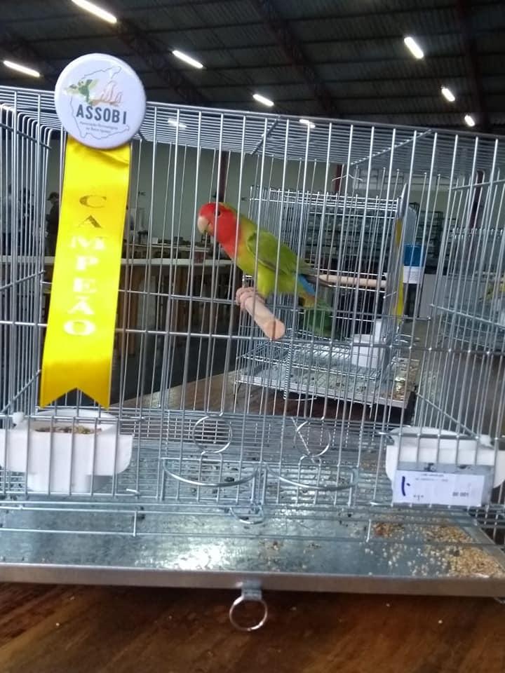 Criadores de pássaros de Iporã do Oeste conquistam títulos em campeonato no Paraná