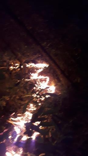 Vídeo: Bombeiros levam seis horas para combater incêndio em reflorestamento no interior de Riqueza