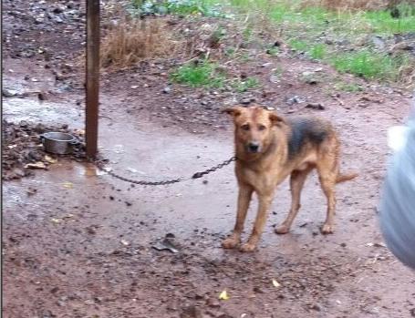 Polícia Civil resgata animais que sofriam maus-tratos em Pinhalzinho