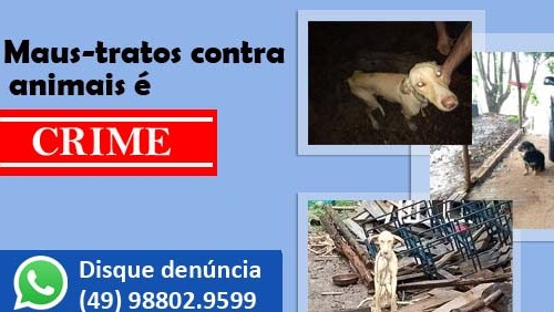 Polícia Civil resgata animais vítimas de maus-tratos