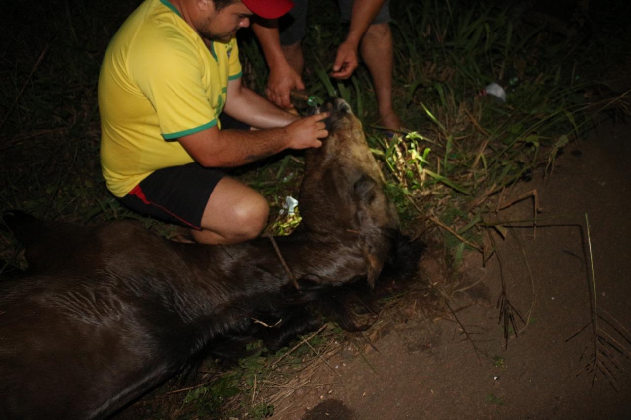 Cavalo morre à margem da BR-163 vítima de maus-tratos