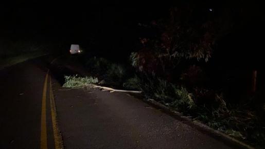 Galho de árvore sobre a pista provoca acidente na SC 496