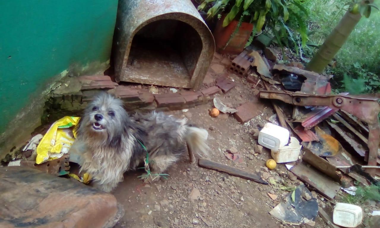 Vigilância Sanitária de Descanso alerta para casos de abandono e maus-tratos de animais