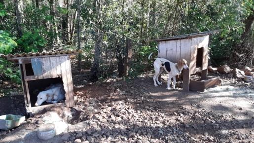 Proprietários são notificados por maus-tratos a animais no interior de Caibi
