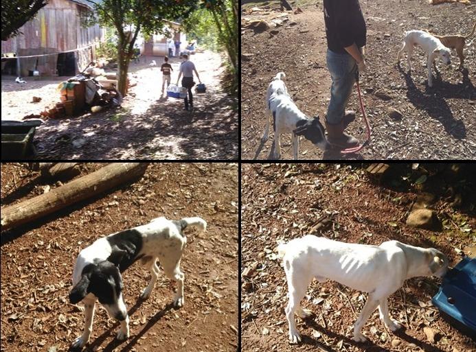 Casal é autuado em flagrante por maus tratos a animais