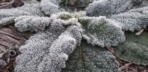 Corpus Christi registra temperaturas negativas na Serra Catarinense