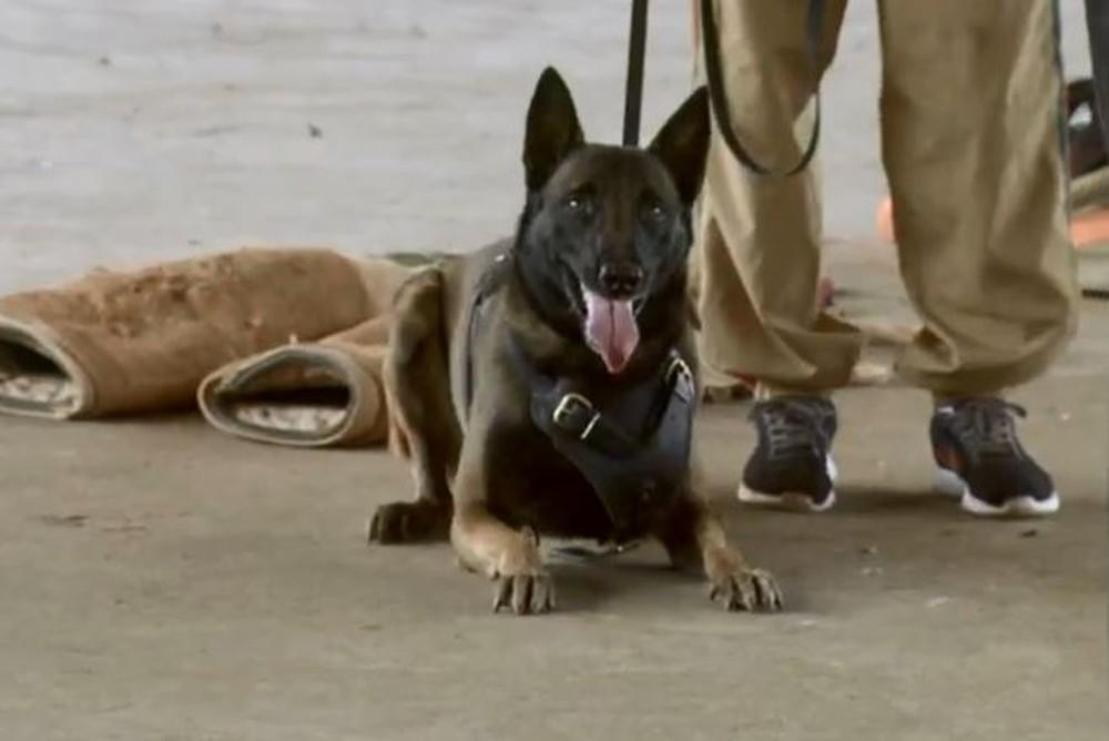 Mais de 30 cães participam de treinamento para operações policiais