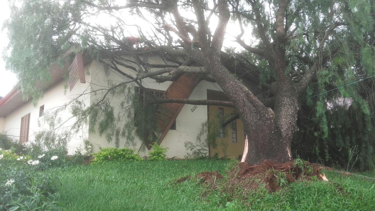 Chuva com vento derruba árvores e mobiliza Bombeiros em municípios da região