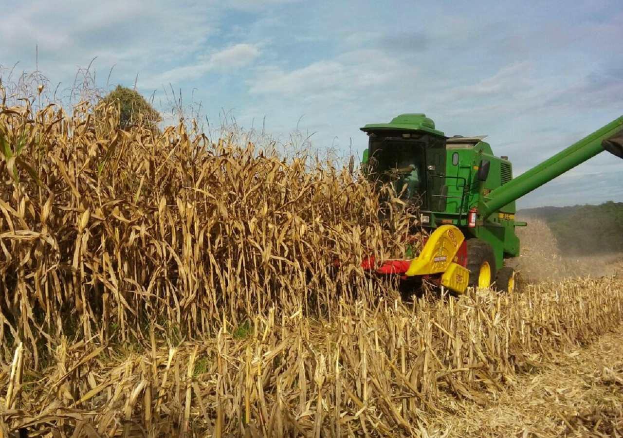 Área para produção de milho sofre redução na região Extremo Oeste