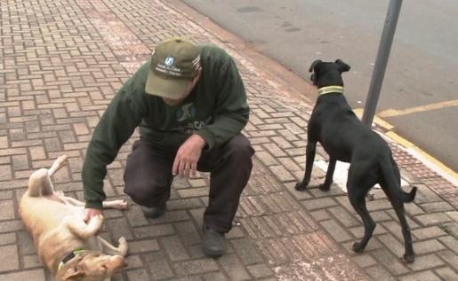 Cães esperam por dona internada há uma semana em frente a hospital no Oeste