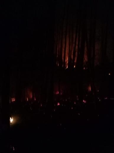 Novo incêndio em vegetação mobiliza bombeiros por oito horas em São Lourenço