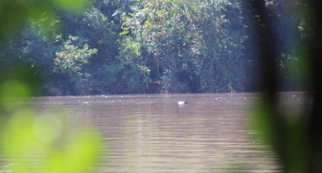 Polícia Ambiental gaúcha confirma que corpo encontrado é de Esequiel Espens