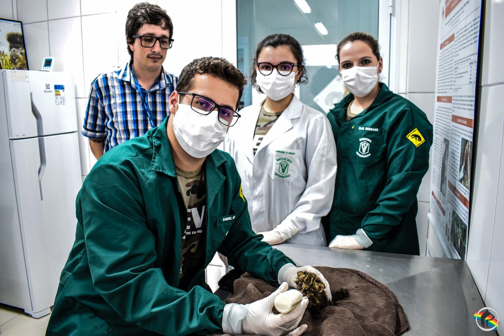 VÍDEO: NEVS realiza a reabilitação de animal ameaçado de extinção