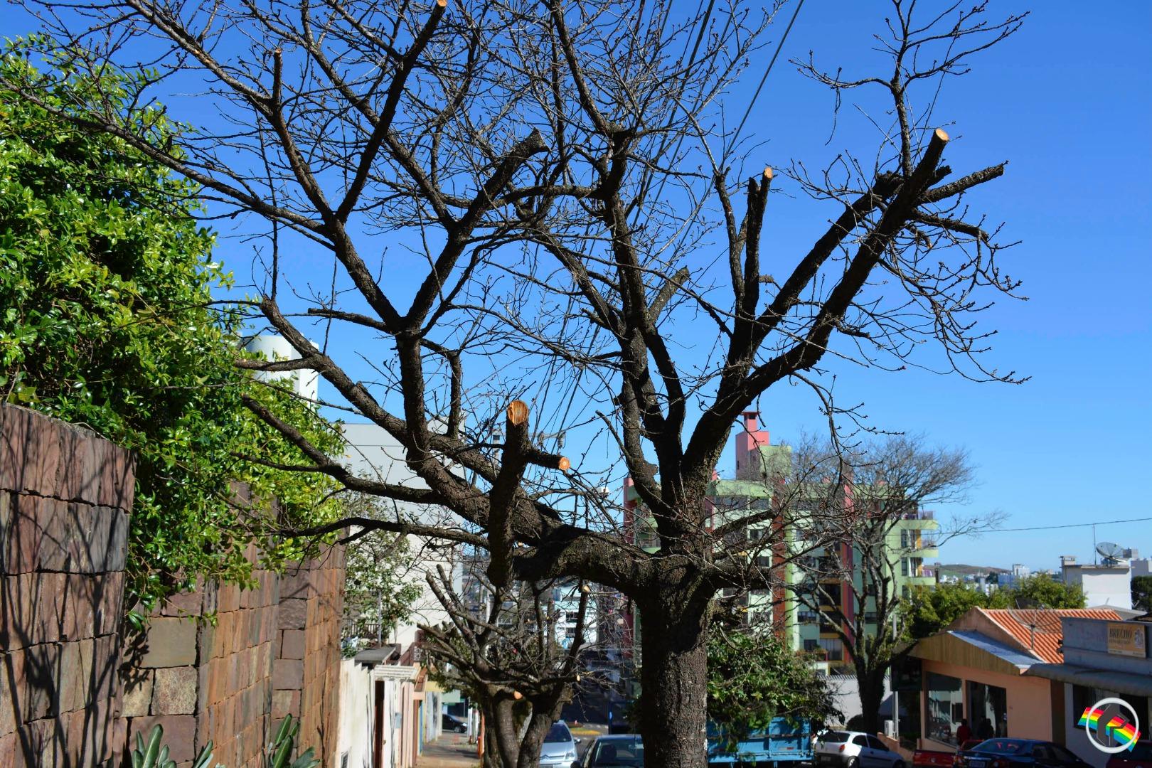 Moradora reclama de poda de árvores em São Miguel do Oeste