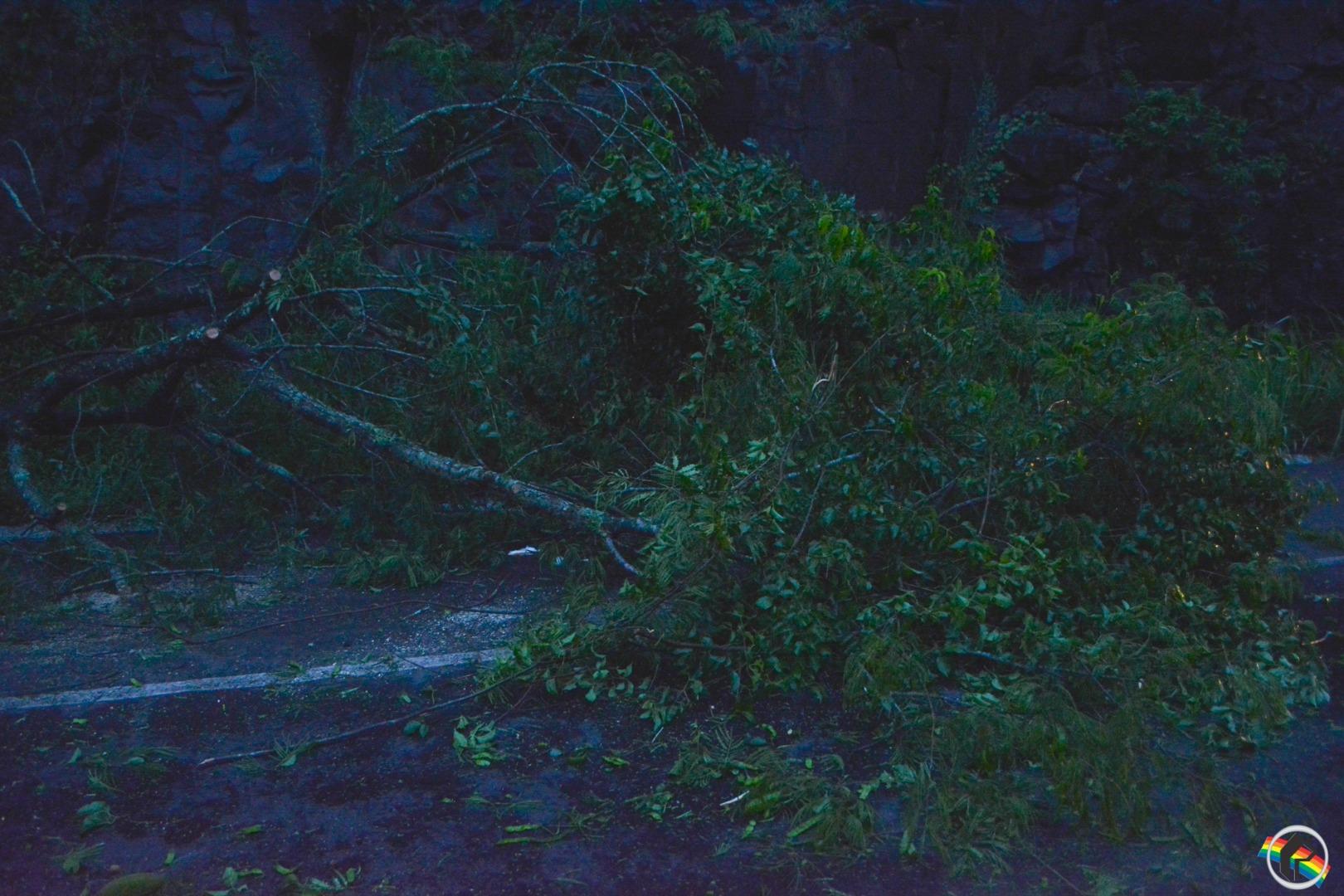 Bombeiros realizam a retirada de árvore que caiu na BR-282