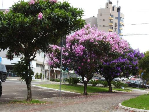 Arborização urbana é regulamentada em São Miguel do Oeste