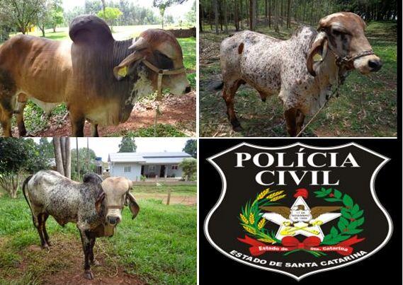 Polícia Civil conclui investigação de estelionato