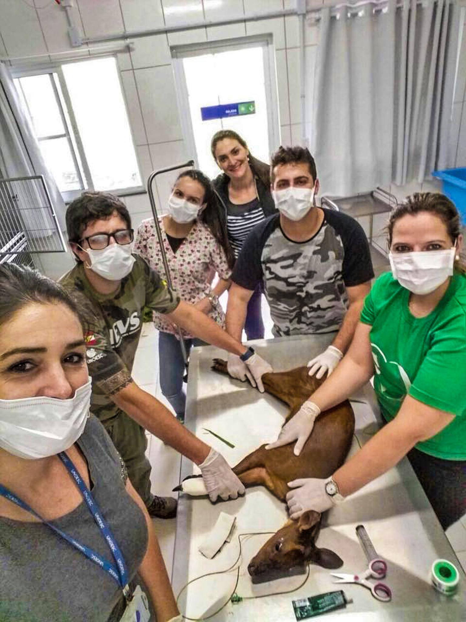 VÍDEO: PMA realiza soltura de animal tratado no Hospital Veterinário da Unoesc