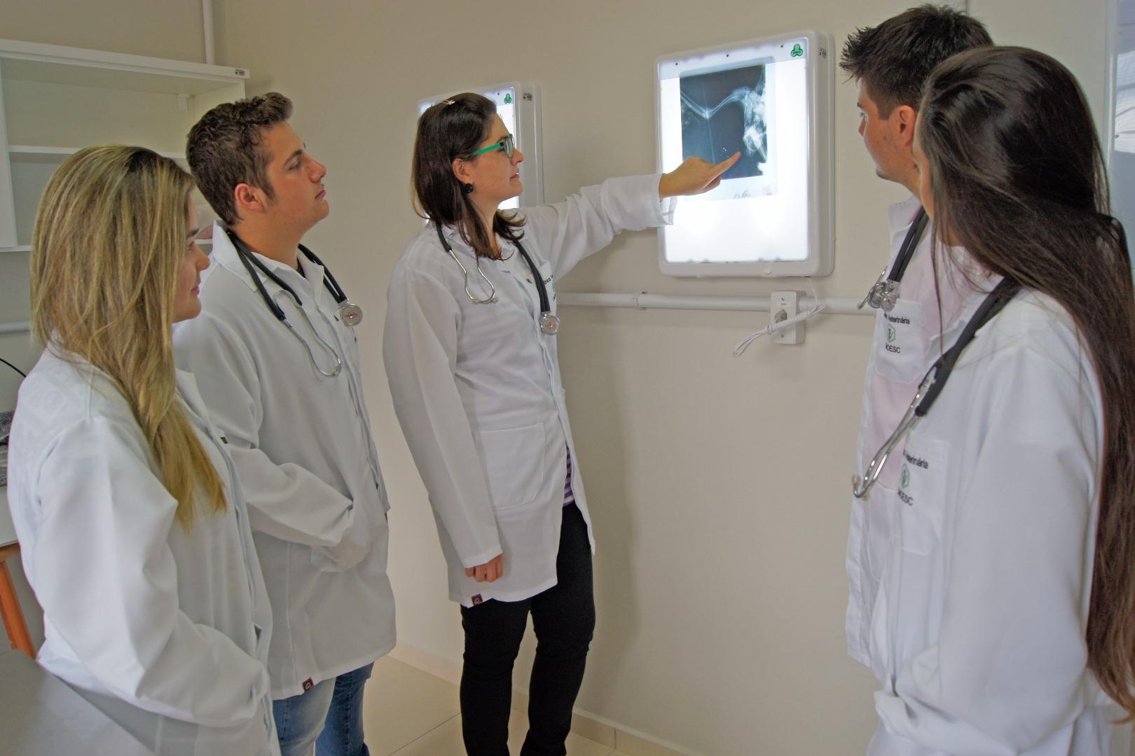 Curso de Medicina Veterinária da Unoesc conquista conceito quatro no MEC