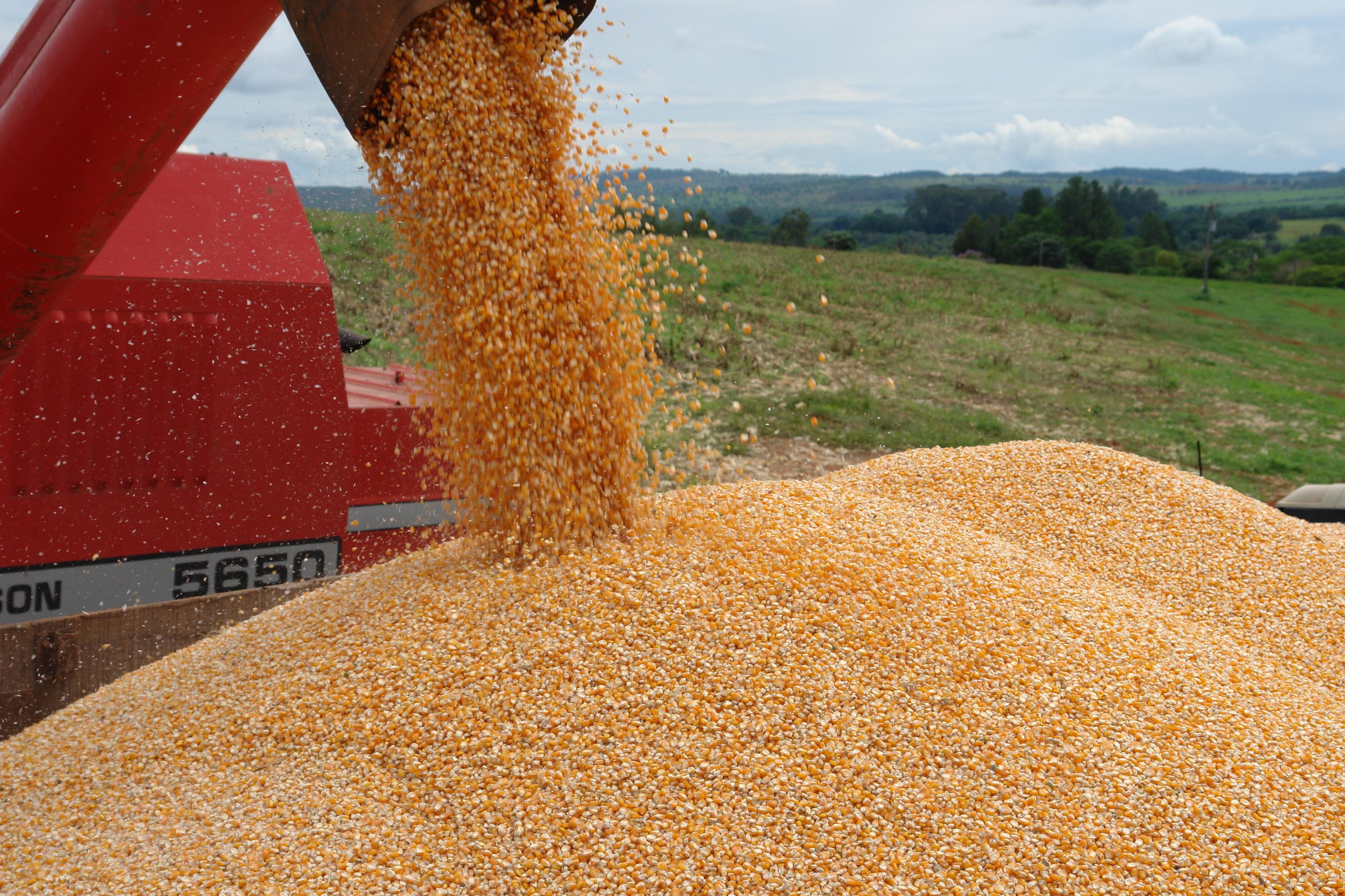 Estado catarinense deve ter safra recorde de grãos neste ano