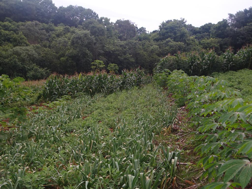Cultivo de sementes crioulas em Itapiranga atrai visitantes internacionais