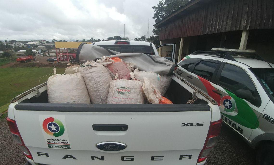 Polícia Militar Ambiental flagra comércio irregular de pinhão