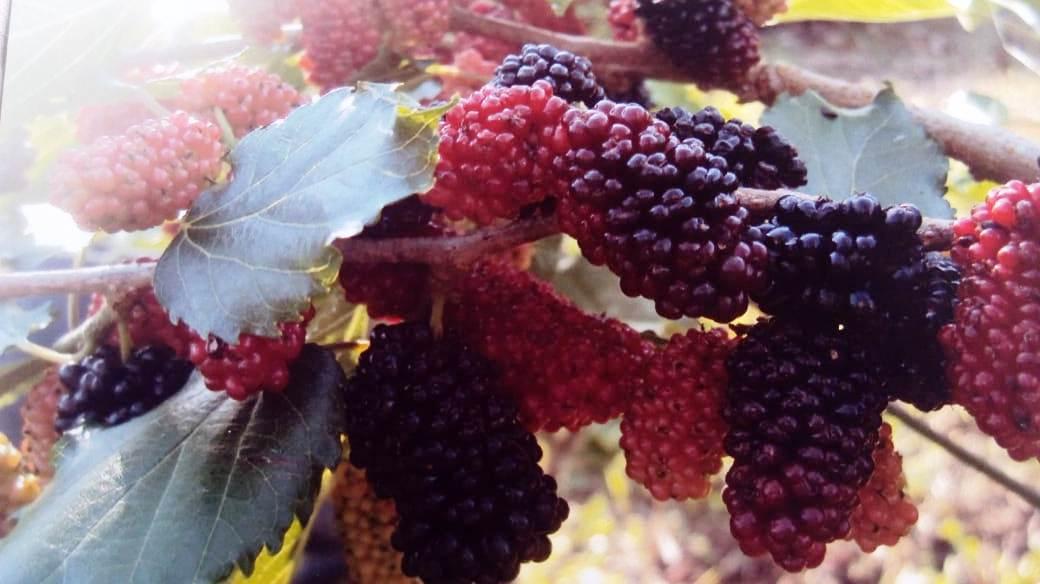 Propriedade no interior de Descanso se destaca na produção de alimentos orgânicos